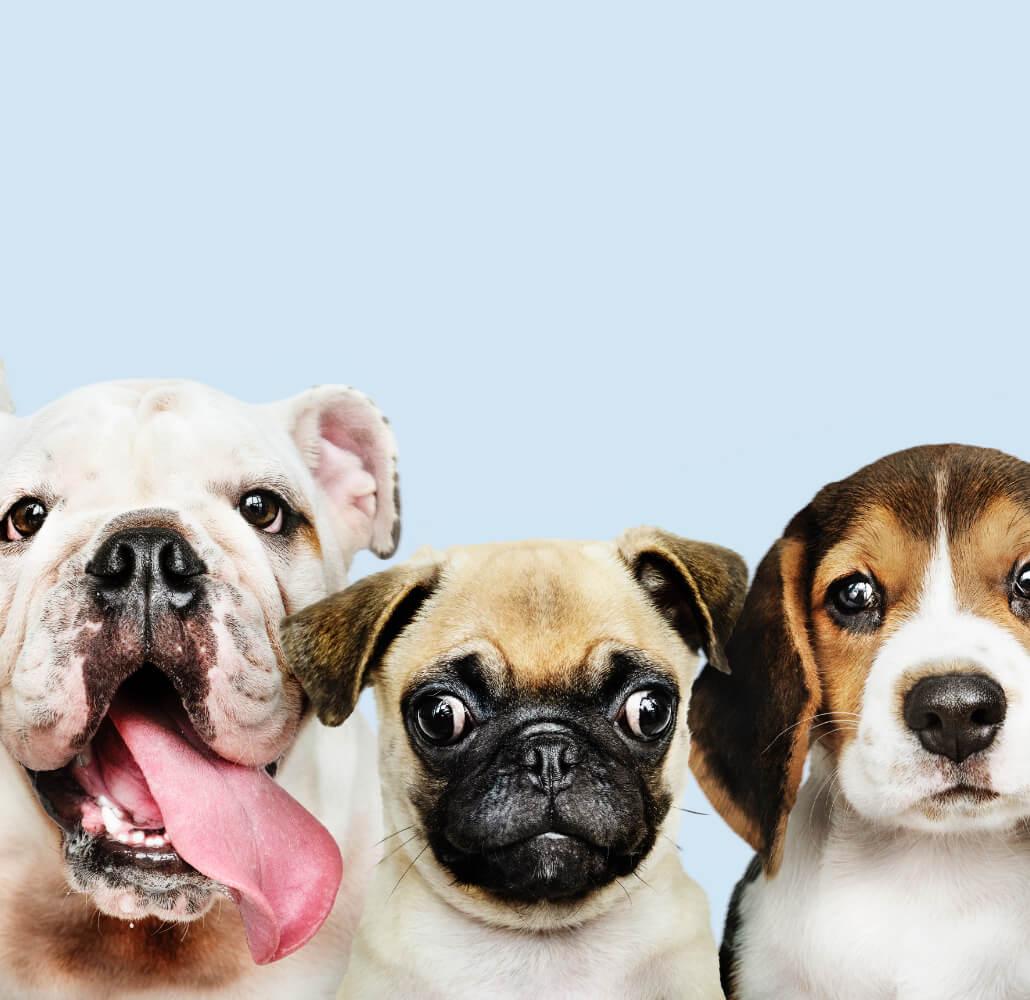 Quorum - Living - Happy Pet Wash Station